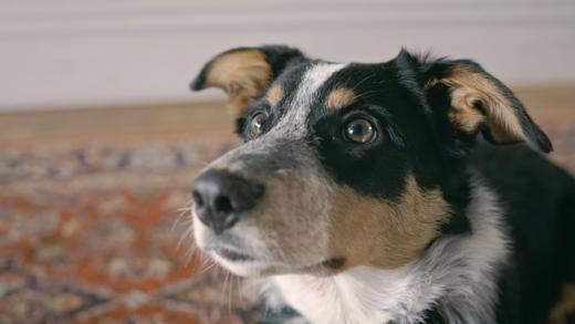 Der zweiminütige Anti-Raucher-Film ist aus der Sicht eines Hundes erzählt