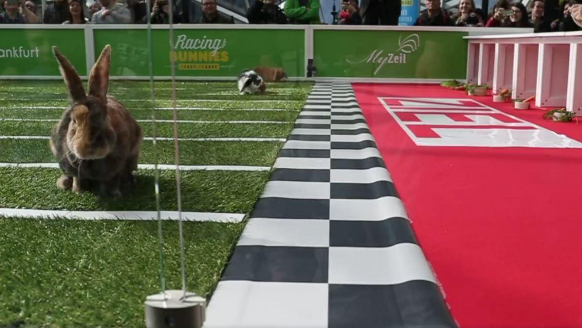 racing bunnies wie sich shopping mall betreiber ece vom osterhasen rasen inspirieren l sst. Black Bedroom Furniture Sets. Home Design Ideas