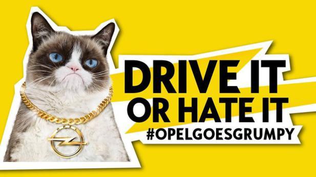 opelgoesgrumpy: dojo und grumpy cat kapern die social-media-accounts