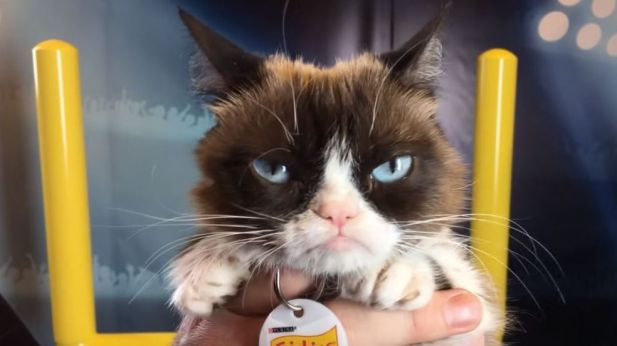 Grumpy Cat war ein Internetstar