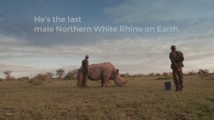 Kampagne: Ol Pejeta Conservancy | The World's Most Eligible Bachelor
