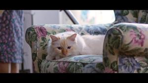 Kampagne: Oceana - Sad Cats