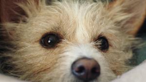 """Kampagne: Zooroyal """"Für Tiere wie deins"""" - Hund 2017"""