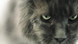 """Kampagne: Zooroyal """"Für Tiere wie deins"""" - Katze 2017"""