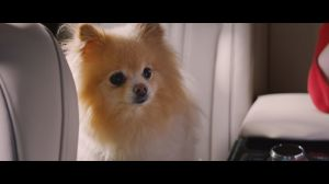 Kampagne: GENESIS | DRIVER VERSUS FIERCE CUTE DOG