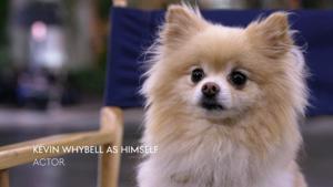 Kampagne: GENESIS | BEHIND THE SCENES: DRIVER VERSUS DOG