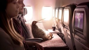 Kampagne: Air New Zealand: #BetterWayToFly
