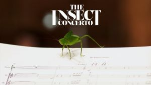 Kampagne: INSECT CONCERTO: ein klassisches Musikstück für Insekten und Orchester