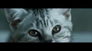 Kampagne: Whiskas: Neugierig - ein Leben lang